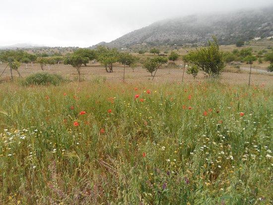 Flowers of Crete: Flowers