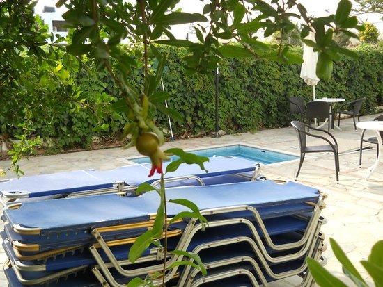 MariRena Hotel: Детский бассейн и гранат