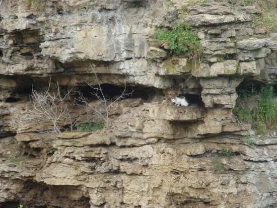 Vermillion Falls: Cat on a ledge across the falls