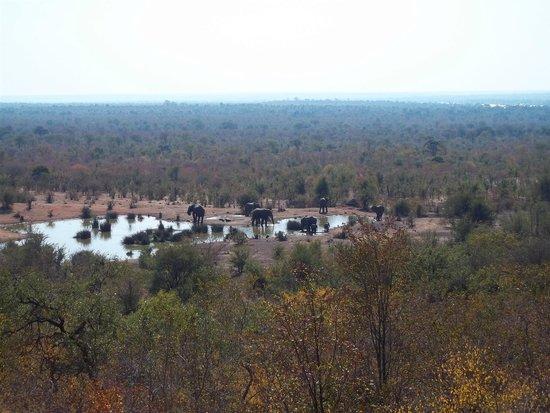 Victoria Falls Safari Lodge: Elephants at the waterhole - taken from room