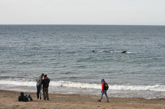 Playa El Doradillo: southern right whale
