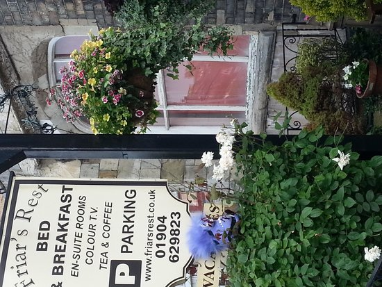 Friars Rest Guest House : minions on tour