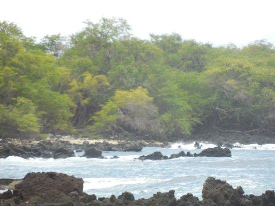 Ahihi-Kinau Natural Area Reserve: Ahihi-Kinau