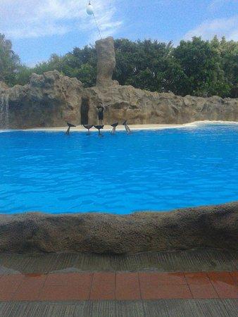 Los simpaticos delfines picture of loro parque puerto de la cruz tripadvisor - Loro parque puerto de la cruz ...