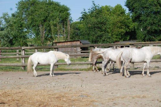 Agriturismo Prato Pozzo: I cavalli Delta di Prato Pozzo