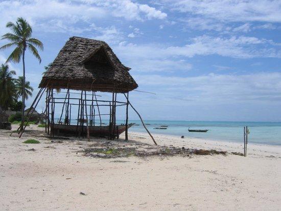 La Papaye Verte : Plage de Jambiani