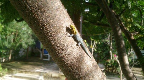 "La Papaye Verte : Un ami dans les jardins de la ""papaye verte """