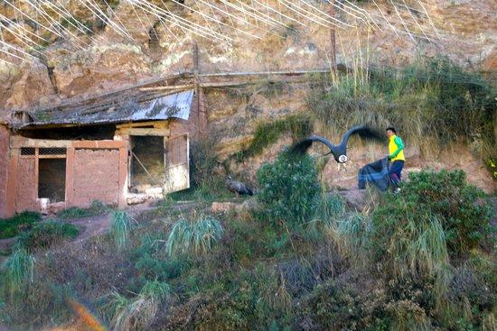Santuario Animal de Cochahuasi: Condors
