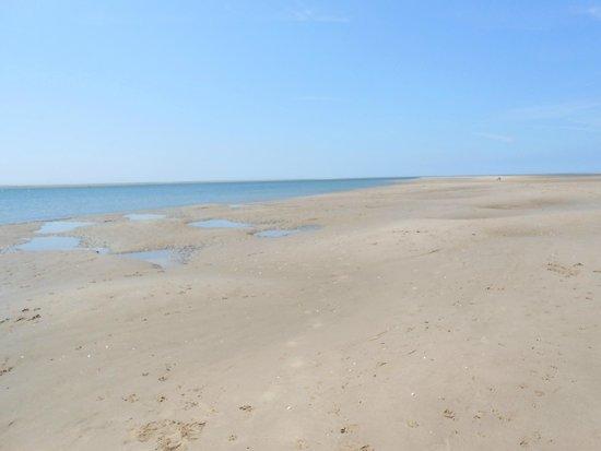 Penhelig Arms: Aberdyfi beach
