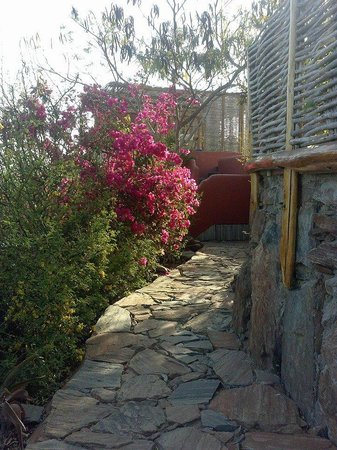 Los Colibris Casitas: path in front of Mr. Bing's (beautiful flowers!)