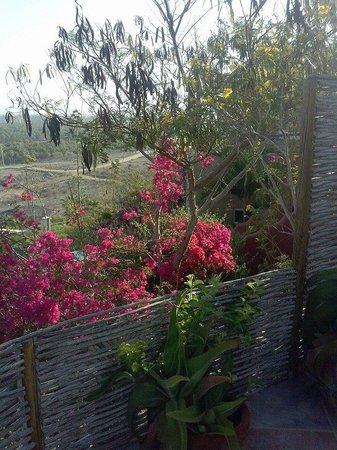 Los Colibris Casitas: view from Mr. Bing's patio (facing east)