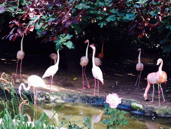 Parco Gallorose : Bellissima sorpresa nel trovare questo paradiso per grandi e piccini!