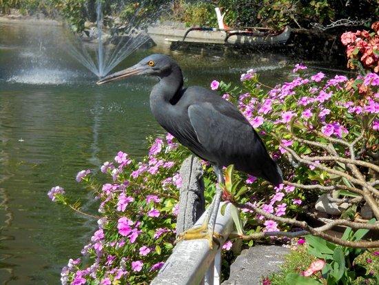 Ayodya Resort Bali: Hotel&grounds