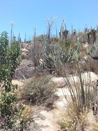 Living Desert Zoo & Gardens: Badger