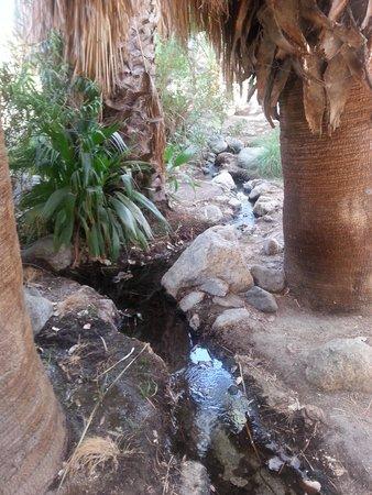 Living Desert Zoo & Gardens: Bobcat