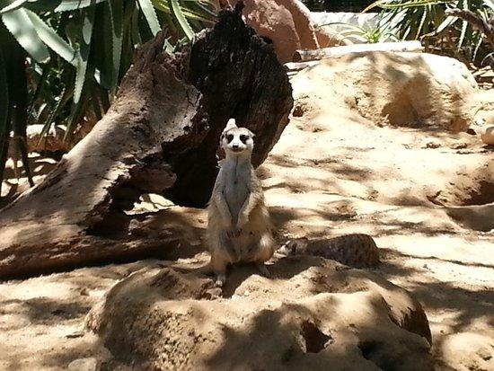 Living Desert Zoo & Gardens: Living Desert water source