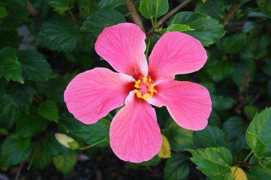 Aldiana Alcaidesa: Tolle Flora und Fauna
