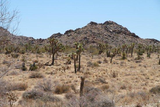 Joshua Tree National Park: Il fait sec
