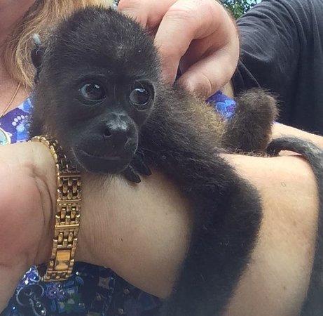 Hotel Riu Guanacaste: Baby Monkey from Congo Zipline Reserve