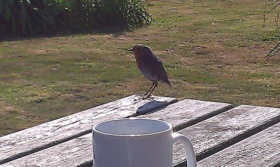 YHA Lizard Point : Un amico a colazione