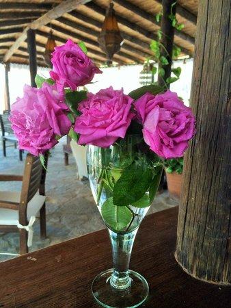 leMarquis Ibiza: Rosas de nuestro jardín