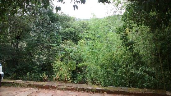 Bosque do Lapao: Paisagem exuberante.