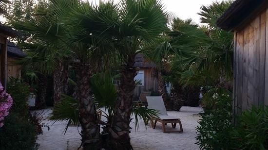 Kon Tiki Riviera Villages : garden