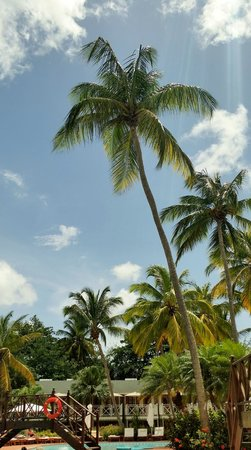 Sandals Halcyon Beach Resort : island beauty