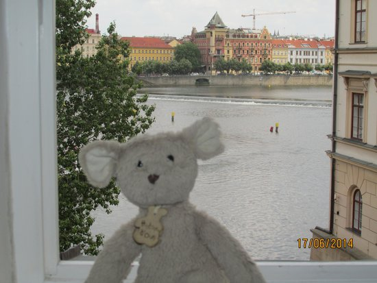 Archibald At the Charles Bridge : Sourissou loved it!