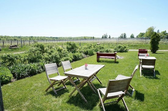 Prince Edward County Wine and Culinary Tours: Closson Chase backyard