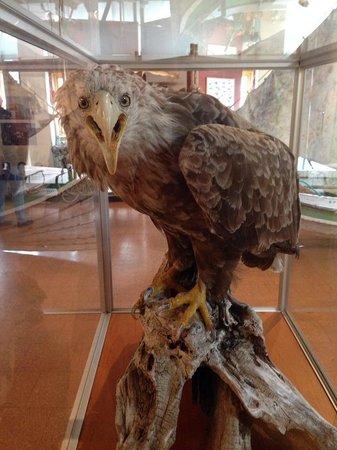Nordkappmuseet: Eagle