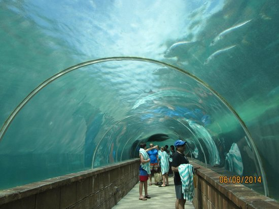 Atlantis, Coral Towers, Autograph Collection: Aquarium