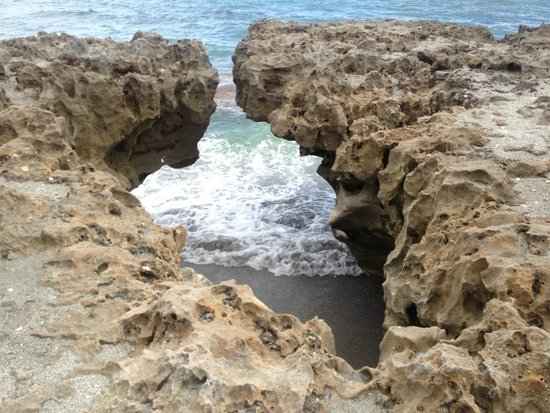 Hobe Sound Nature Center : Blowing Rocks