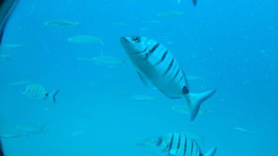 Submarine Safaris Lanzarote: finding Nemo.... :)