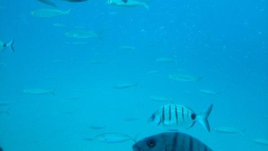 Submarine Safaris Lanzarote: brilliant views