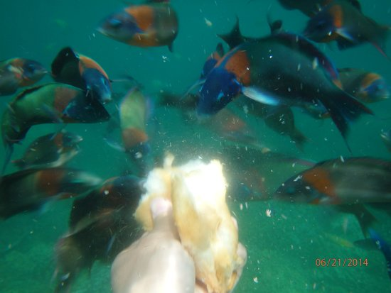 Captain Bob's Adventure Cruises: snorkeling