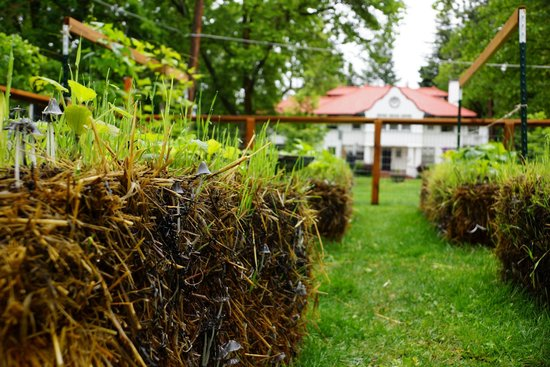 The Odell House: Hay bails with vegtables growing in the front yard