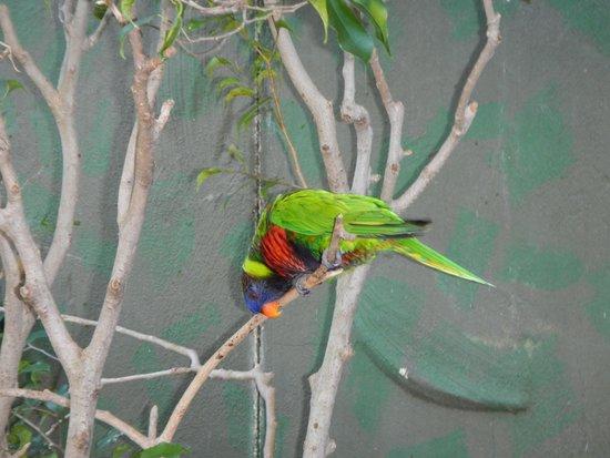Jardines Busch: Birds