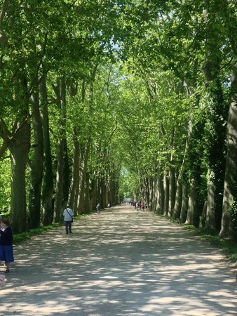 Chateau de Chenonceau: Treelined avenue up to chateau