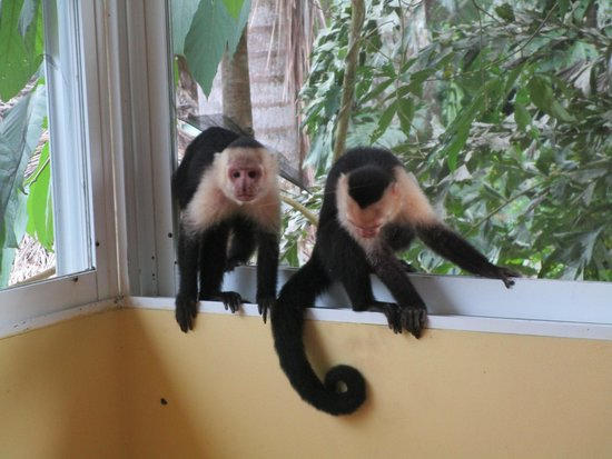 La Posada Private Jungle Bungalows: The monkeys sneaking into our porch thinking we have food
