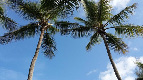 Seafarer Resort and Beach : View from the middle hammock on the beach