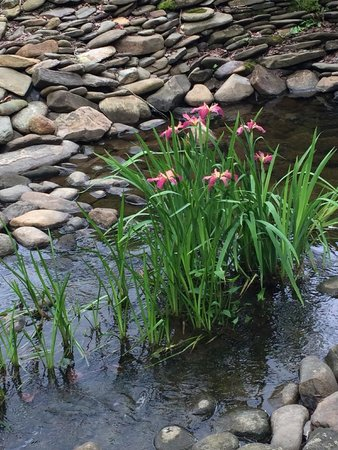 Half-Mile Farm: Iris in the creek