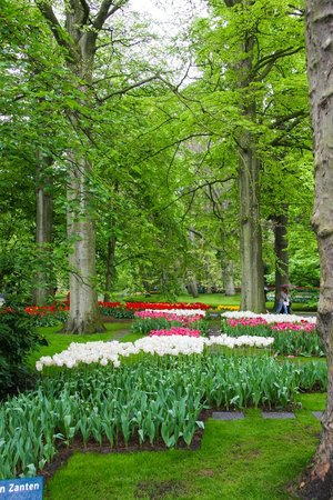 Keukenhof: Pretty in all directions