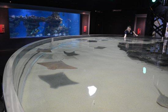 Greater Cleveland Aquarium: Awesome stingrays