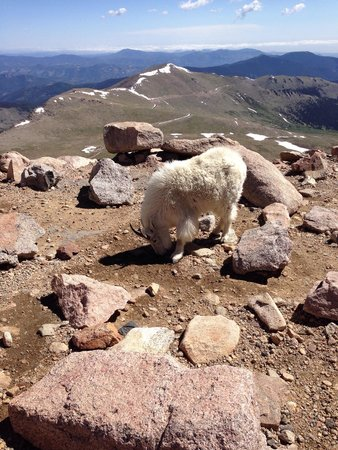 Mount Evans : Greeting us at the top of Mt Evans
