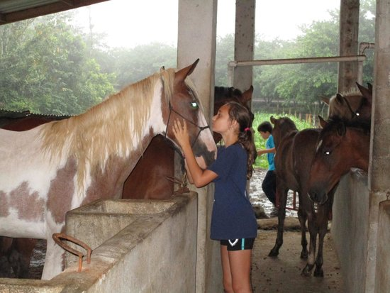 Leaves and Lizards Arenal Volcano Cabin Retreat: The stable with sweet horses