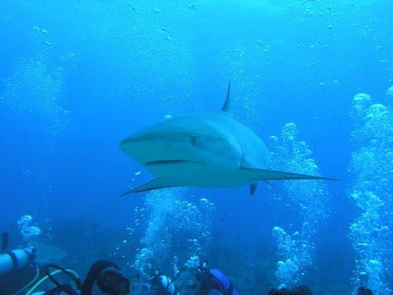 Ocean Explorers Dive Center : Shark loves bubbles
