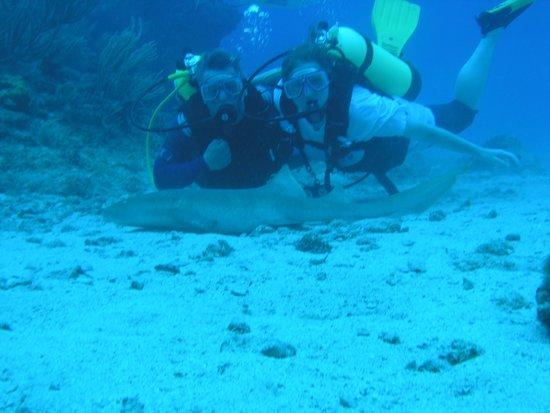 Ocean Explorers Dive Center: Nurse Shark