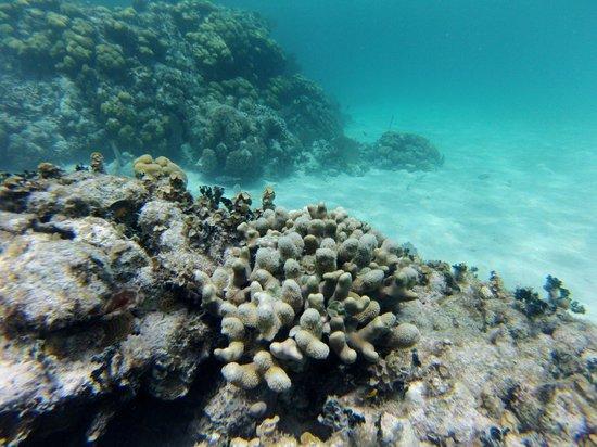 Anda De Wata Tours: Reef