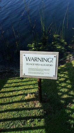 Hyatt Regency Coconut Point Resort & Spa: Guess I'm not getting that ball back!